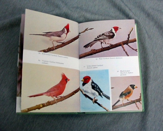 Image for THE HANDBOOK OF FOREIGN BIRDS Their Care in Cage and Aviary